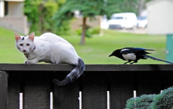 Осёдлые-птицы-Описания-названия-и-виды-осёдлых-птиц-14