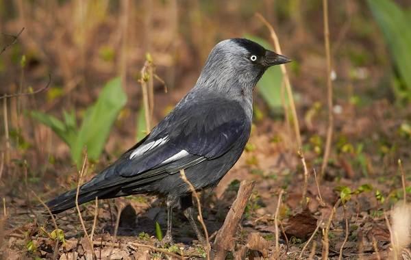 Осёдлые-птицы-Описания-названия-и-виды-осёдлых-птиц-15