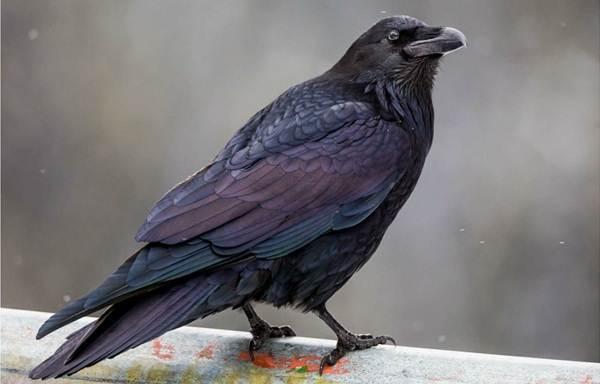 Осёдлые-птицы-Описания-названия-и-виды-осёдлых-птиц-17