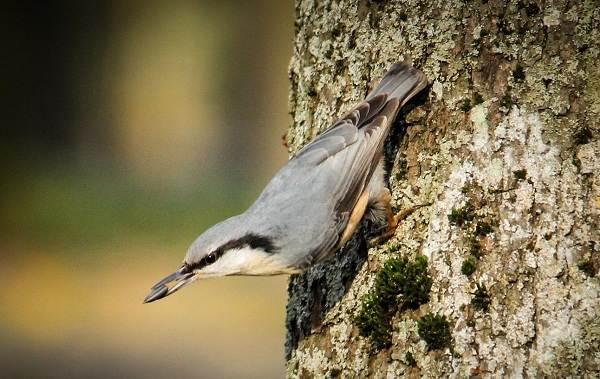 Осёдлые-птицы-Описания-названия-и-виды-осёдлых-птиц-18
