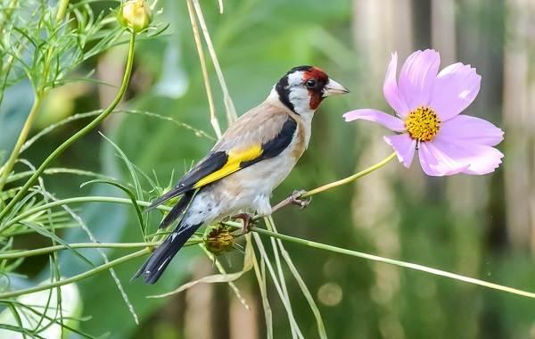 Осёдлые-птицы-Описания-названия-и-виды-осёдлых-птиц-3