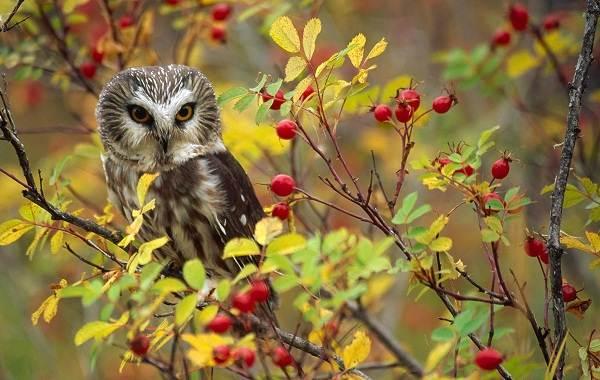 Осёдлые-птицы-Описания-названия-и-виды-осёдлых-птиц-7
