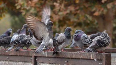 Осёдлые птицы. Описания, названия и виды осёдлых птиц