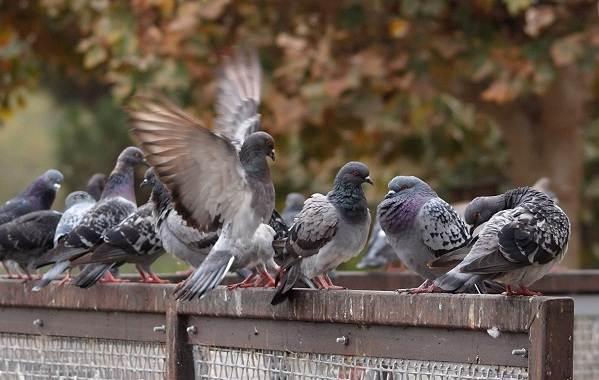 Осёдлые-птицы-Описания-названия-и-виды-осёдлых-птиц-8