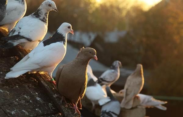 Осёдлые-птицы-Описания-названия-и-виды-осёдлых-птиц-9