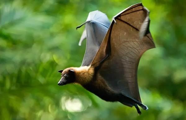 Виды-лис-Описание-особенности-названия-и-образ-жизни-видов-лисиц-37