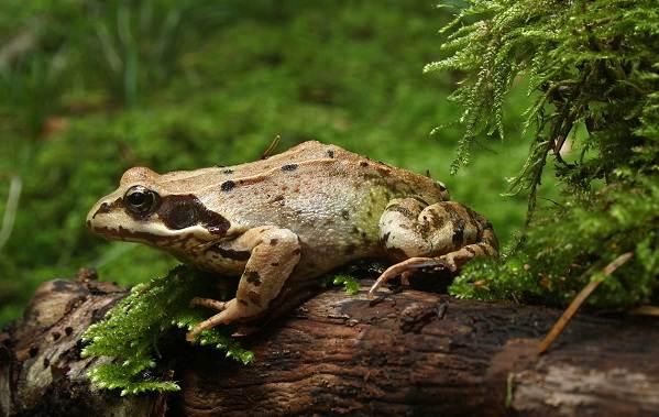 Виды-лягушек-Описание-особенности-и-названия-видов-лягушек-11