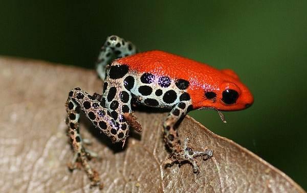 Виды-лягушек-Описание-особенности-и-названия-видов-лягушек-12