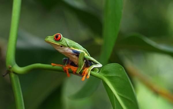 Виды-лягушек-Описание-особенности-и-названия-видов-лягушек-14