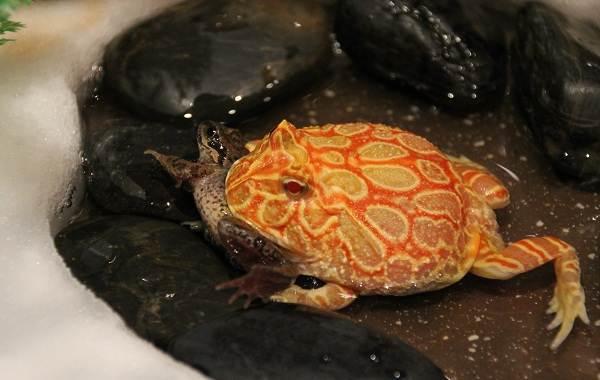 Виды-лягушек-Описание-особенности-и-названия-видов-лягушек-16
