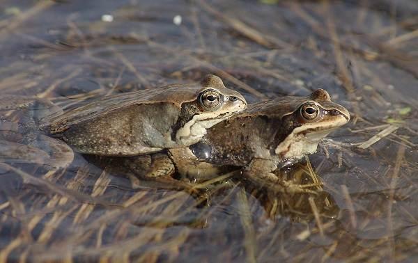 Виды-лягушек-Описание-особенности-и-названия-видов-лягушек-18