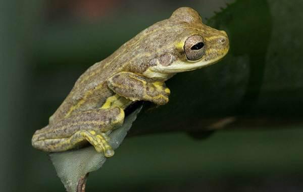Виды-лягушек-Описание-особенности-и-названия-видов-лягушек-2