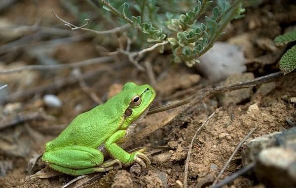 Виды-лягушек-Описание-особенности-и-названия-видов-лягушек-20