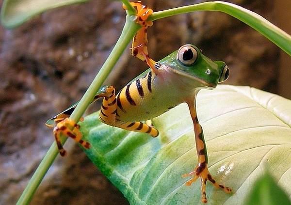 Виды-лягушек-Описание-особенности-и-названия-видов-лягушек-21