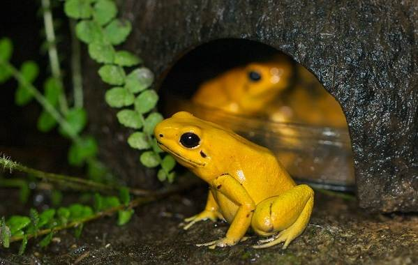 Виды-лягушек-Описание-особенности-и-названия-видов-лягушек-23