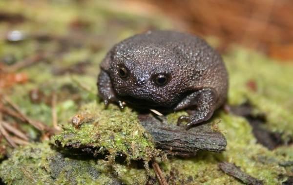 Виды-лягушек-Описание-особенности-и-названия-видов-лягушек-24