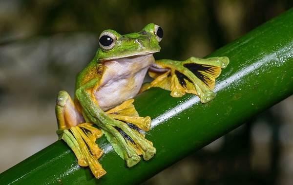 Виды-лягушек-Описание-особенности-и-названия-видов-лягушек-25