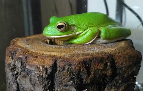 Виды-лягушек-Описание-особенности-и-названия-видов-лягушек-5