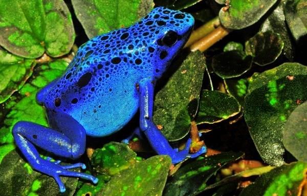 Виды-лягушек-Описание-особенности-и-названия-видов-лягушек-8