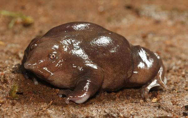 Виды-лягушек-Описание-особенности-и-названия-видов-лягушек-9