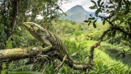 Виды ящериц. Описание, особенности, среда обитания и названия видов ящериц