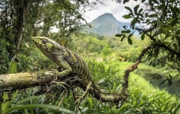 Виды-ящериц-Описание-особенности-среда-обитания-и-названия-видов-ящериц-1