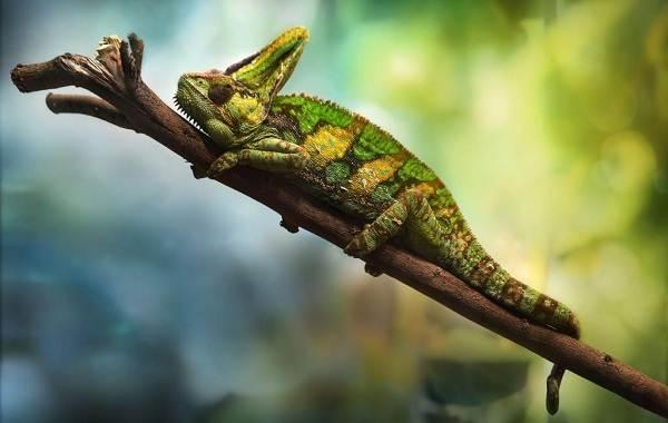 Виды-ящериц-Описание-особенности-среда-обитания-и-названия-видов-ящериц-2