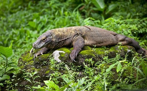 Виды-ящериц-Описание-особенности-среда-обитания-и-названия-видов-ящериц-25