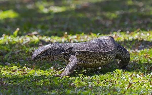Виды-ящериц-Описание-особенности-среда-обитания-и-названия-видов-ящериц-29