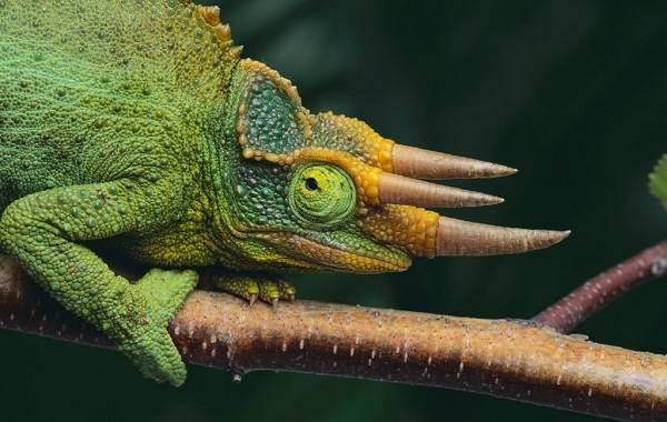 Виды-ящериц-Описание-особенности-среда-обитания-и-названия-видов-ящериц-3