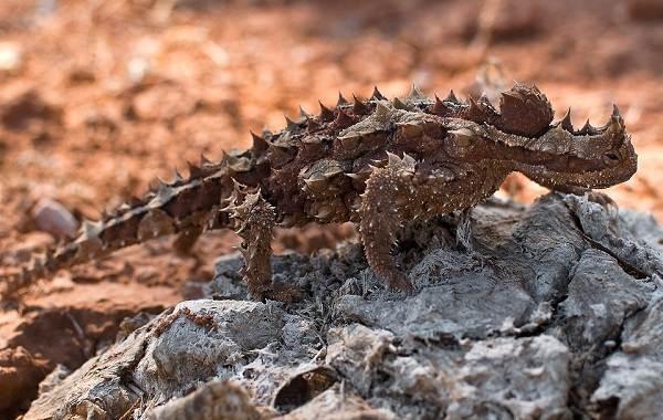 Виды-ящериц-Описание-особенности-среда-обитания-и-названия-видов-ящериц-31
