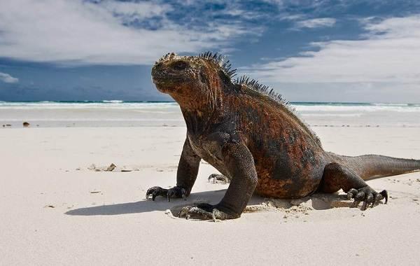 Виды-ящериц-Описание-особенности-среда-обитания-и-названия-видов-ящериц-33