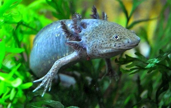 Виды-ящериц-Описание-особенности-среда-обитания-и-названия-видов-ящериц-40