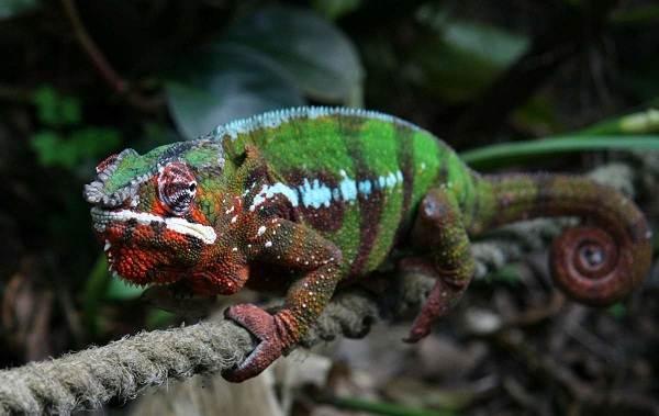 Виды-ящериц-Описание-особенности-среда-обитания-и-названия-видов-ящериц-7