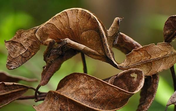 Виды-ящериц-Описание-особенности-среда-обитания-и-названия-видов-ящериц-8