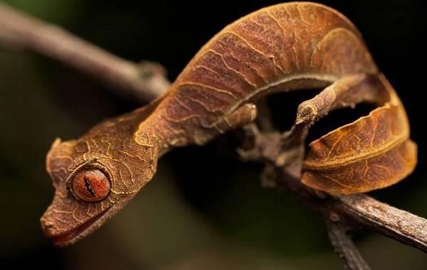 Виды-ящериц-Описание-особенности-среда-обитания-и-названия-видов-ящериц-9