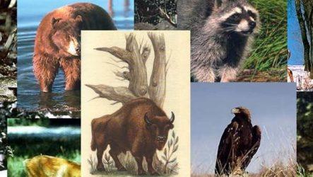 Животные Краснодарского края. Описания, названия и виды животных Краснодарского края