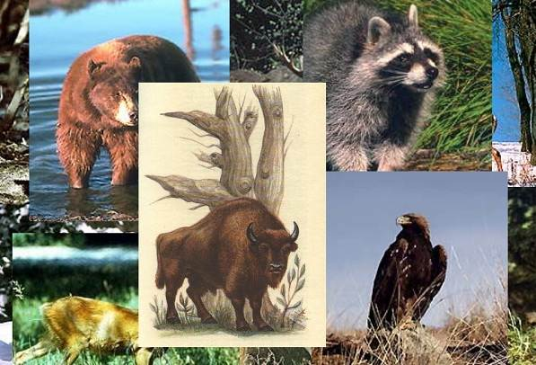 Животные-Краснодарского-края-Описания-названия-и-виды-животных-Краснодарского-края-1