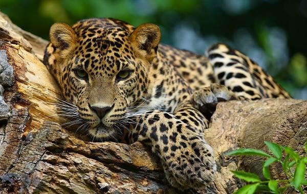 Животные-Краснодарского-края-Описания-названия-и-виды-животных-Краснодарского-края-10