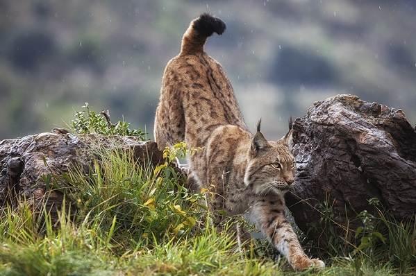 Животные-Краснодарского-края-Описания-названия-и-виды-животных-Краснодарского-края-13