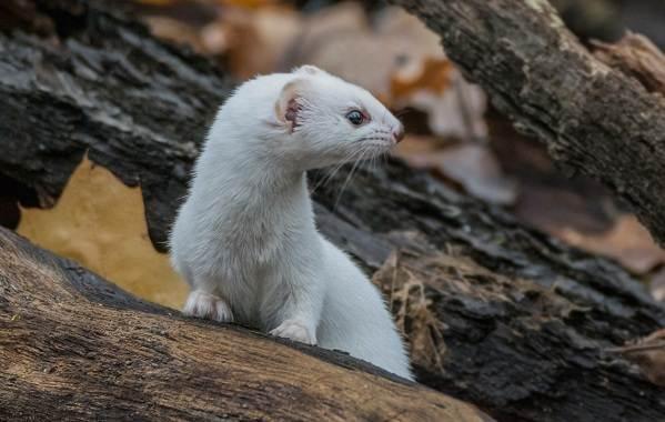 Животные-Краснодарского-края-Описания-названия-и-виды-животных-Краснодарского-края-19