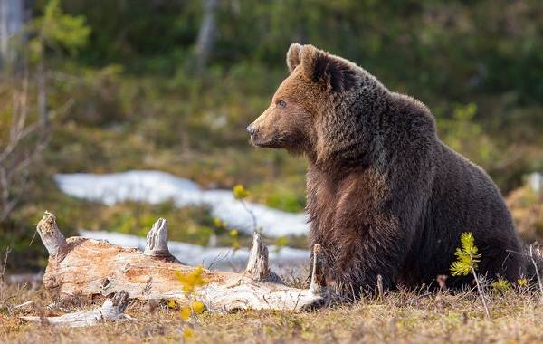 Животные-Краснодарского-края-Описания-названия-и-виды-животных-Краснодарского-края-2