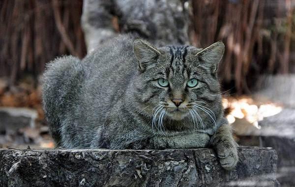 Животные-Краснодарского-края-Описания-названия-и-виды-животных-Краснодарского-края-21