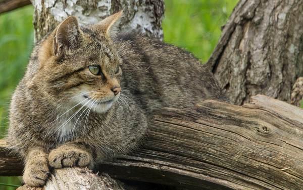 Животные-Краснодарского-края-Описания-названия-и-виды-животных-Краснодарского-края-22