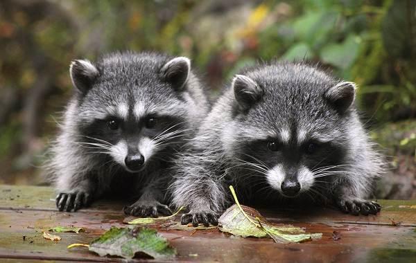 Животные-Краснодарского-края-Описания-названия-и-виды-животных-Краснодарского-края-27