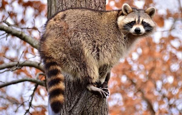 Животные-Краснодарского-края-Описания-названия-и-виды-животных-Краснодарского-края-28