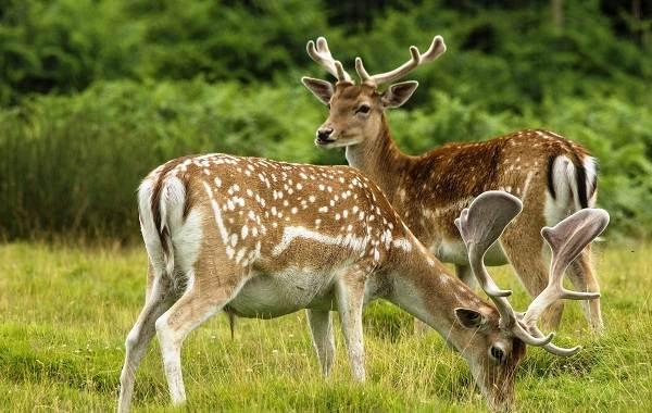 Животные-Краснодарского-края-Описания-названия-и-виды-животных-Краснодарского-края-29