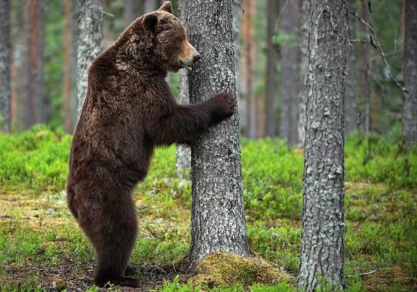 Животные-Краснодарского-края-Описания-названия-и-виды-животных-Краснодарского-края-3