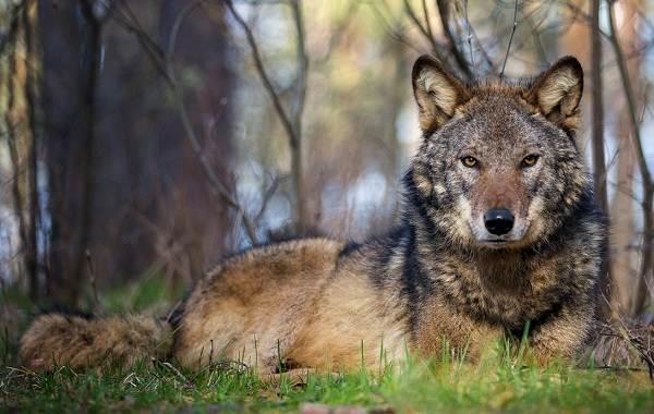 Животные-Краснодарского-края-Описания-названия-и-виды-животных-Краснодарского-края-31
