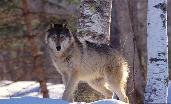 Животные-Краснодарского-края-Описания-названия-и-виды-животных-Краснодарского-края-32